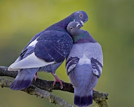 Para mi corazón basta tu pecho... para tu libertad bastan mis alas