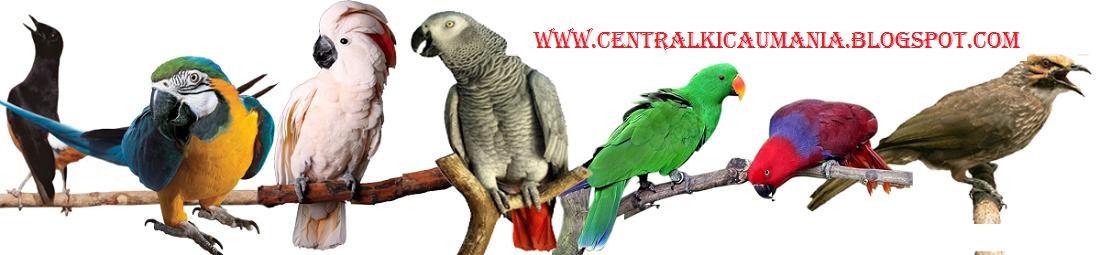 CENTRAL KICAU MANIA