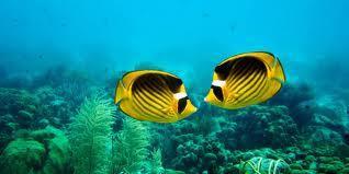 Caribbean Snorkeling Photo