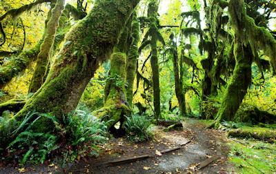 Bosque soleado en el Parque Olímpico, USA. - Sunny forest olympic park usa