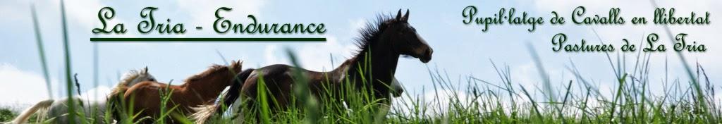 La Tria - Endurance
