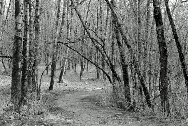 Woodland Trail in Winter