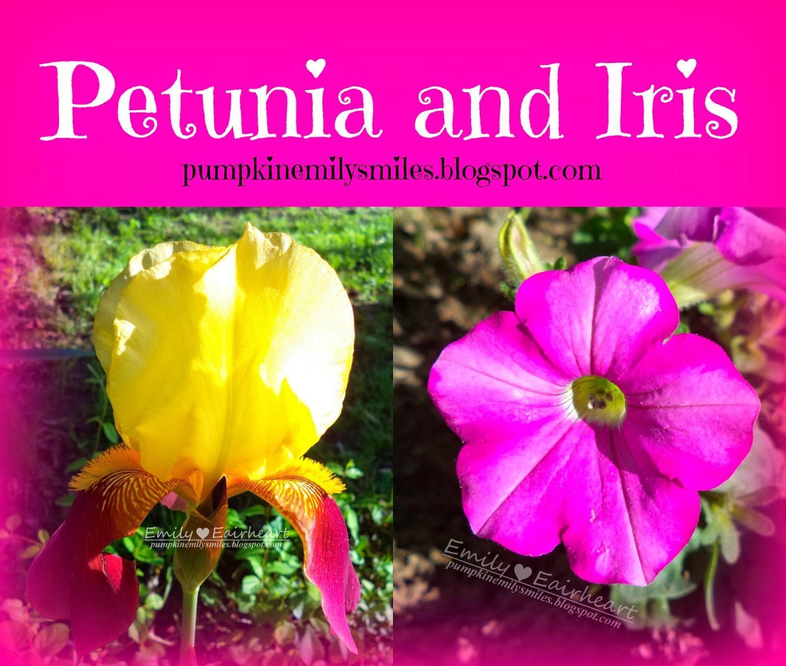Petunia and Iris