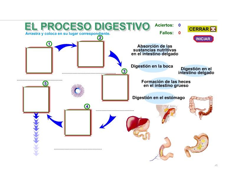 Actualízate y aprende: Fases del Proceso Digestivo