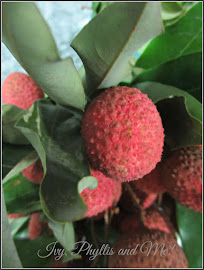 THE INDIAN LYCHEE