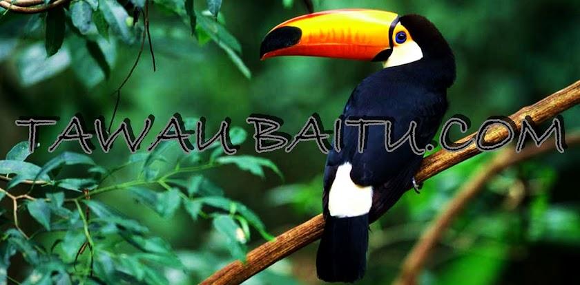 TAWAU BAITU.COM
