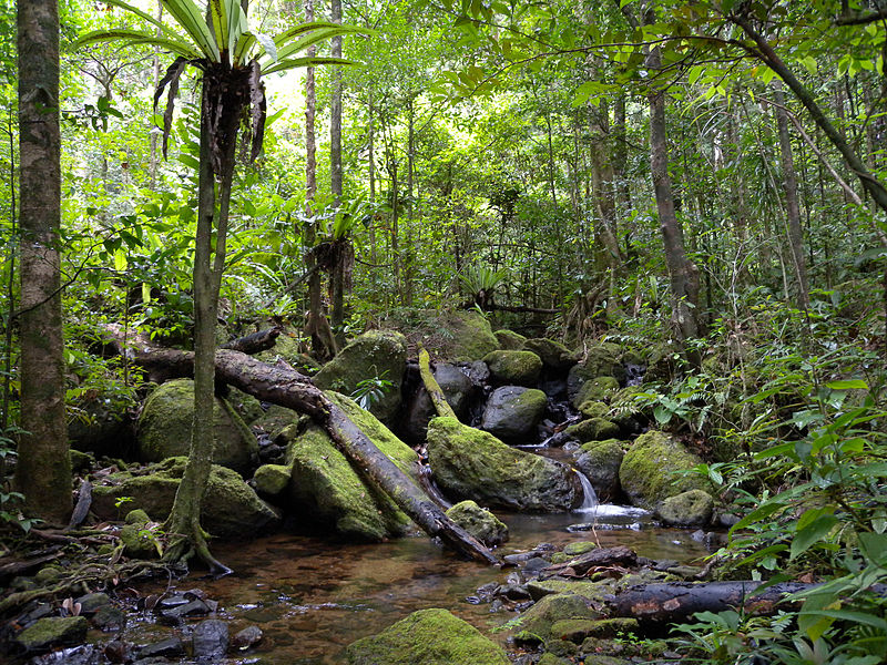 Masoala National Park rainforest