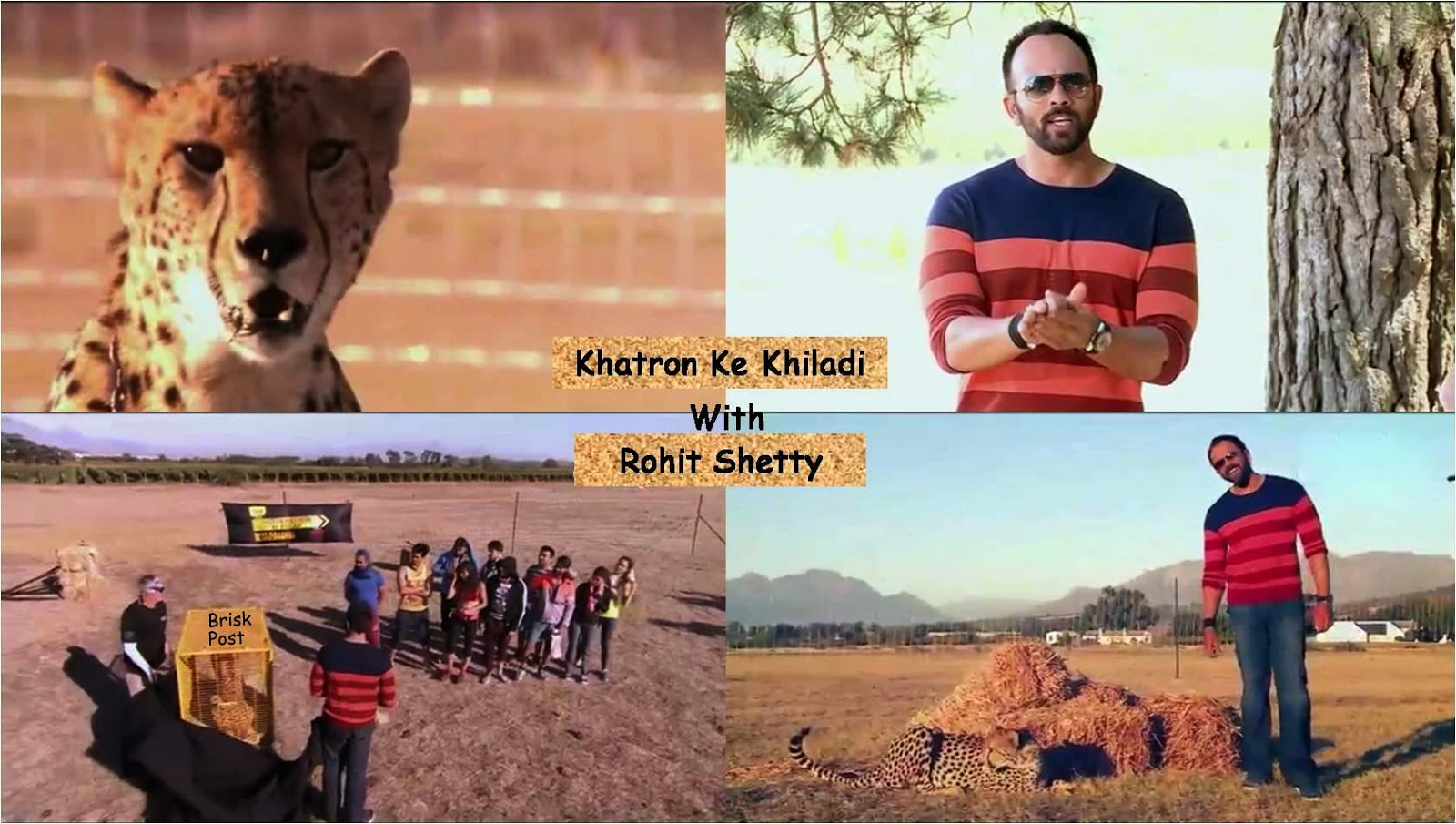 Rohit Shetty featured tiger for Fear Factor Khatron Ke Khiladi contestants