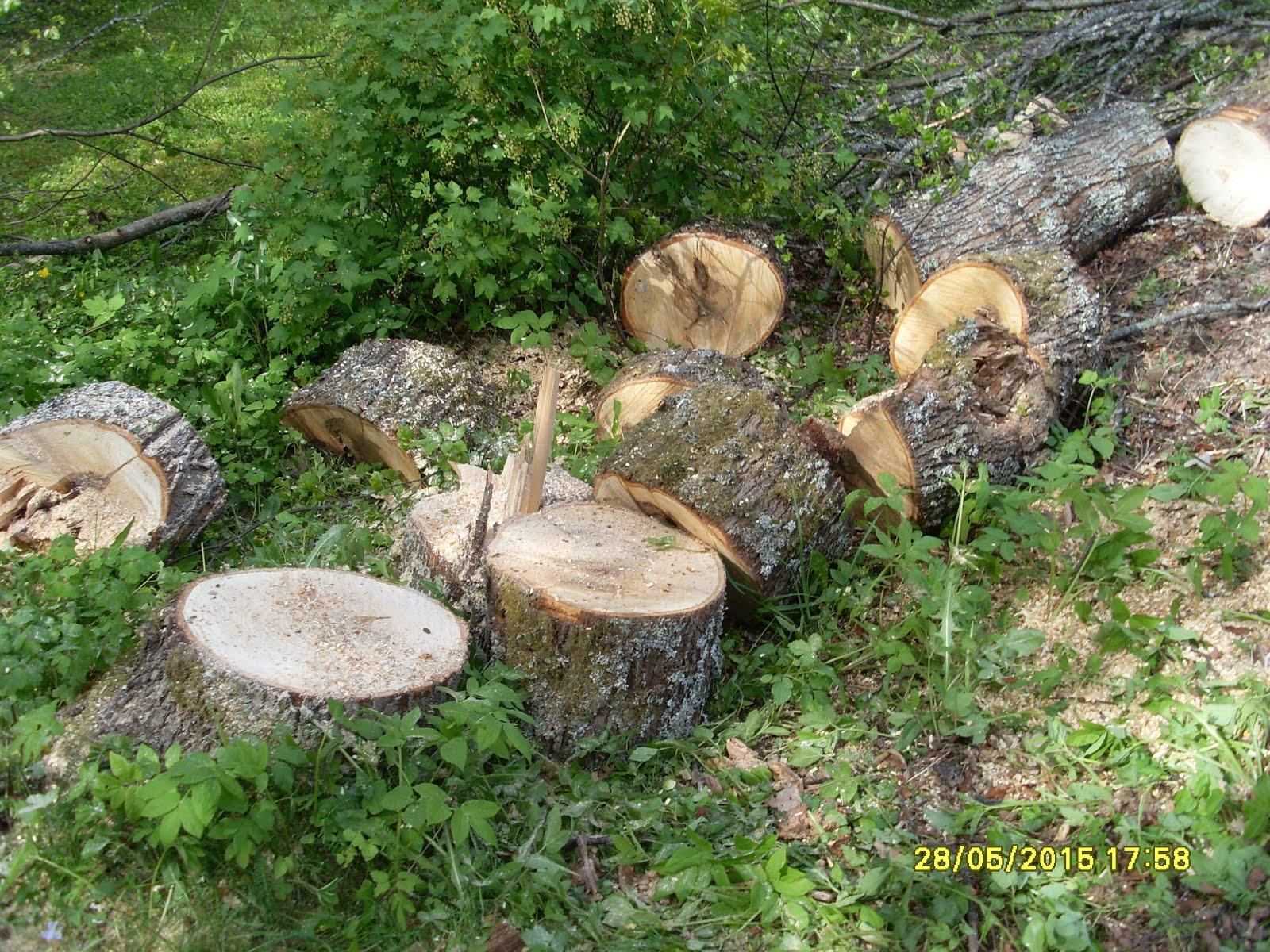 Pätkin kaadetut pihapuut 50 euroa alkava tunti n. 30 cm paloiksi kirveellä palasteltaviksi