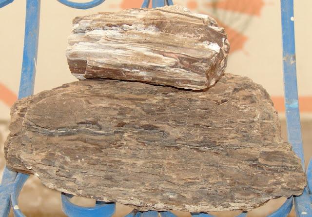 Virtutile lemnului fosilizat