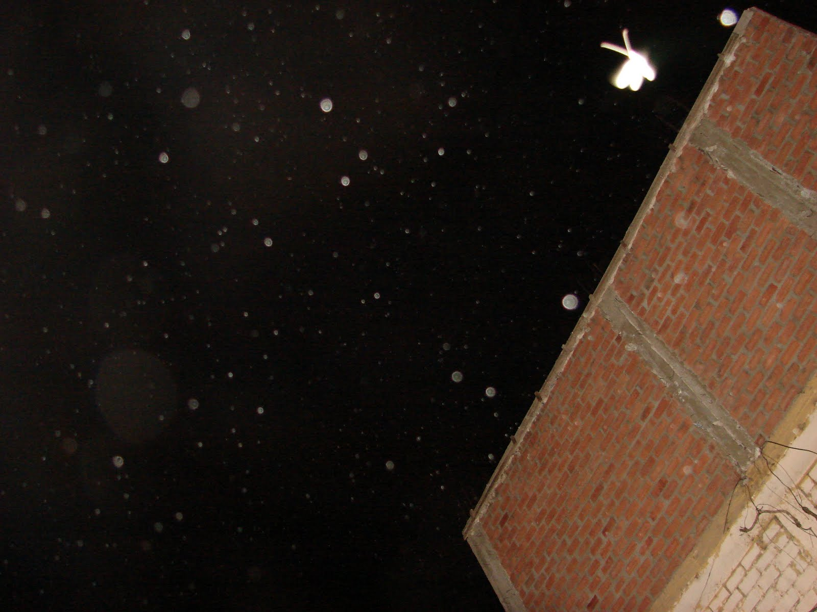 ATENCION-MUNDO-12-OCTUBRE-13-14-15-16...2011-ultimos-super-avistamientos-Mariposa-Y -Corazon,ET,sec