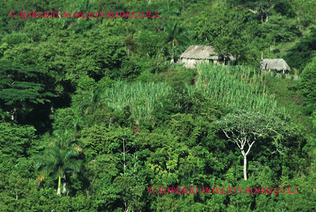 Casas de campesinos en la Sierra Maestra/ Homes of peasants in Sierra Maestra, Cuba