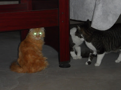 Mika the cat laser eyes, glowing eyes