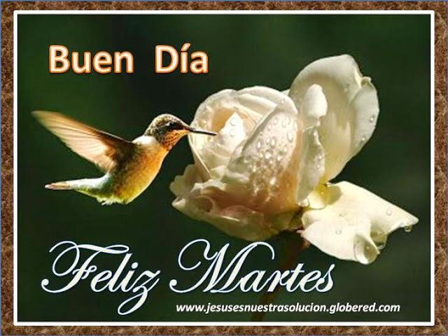feliz martes colibri