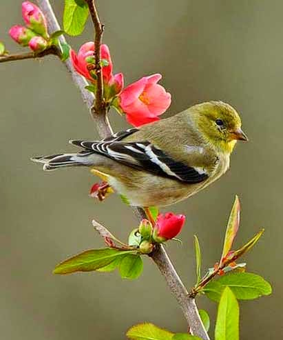 Cool Pictures, Images & Photos For Facebook: Awesome Birds Profile Pics