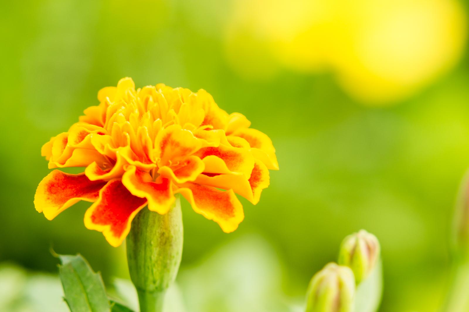 オレンジの綺麗な花の写真