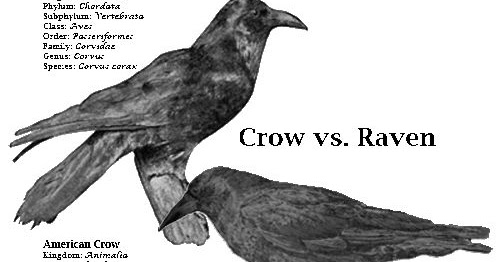 raven crow half man - photo #40