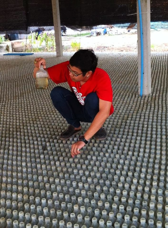 http://1.bp.blogspot.com/-QJDnSWLNJi8/UmvZd89NayI/AAAAAAAABw8/yAVjO_OOYYA/s1600/%C3%A9levage+de+bettas+splendens+en+Thailande.+TK+Betta+Thailand.jpg