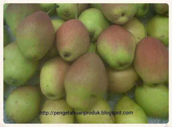 Perbedaan Pear Fragrant Dengan Xianglie