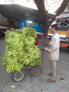 """Nendran "" variety raw bananas for sale in Ernakulam Vegetable market."