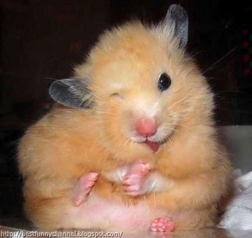 Funny hamster 3.