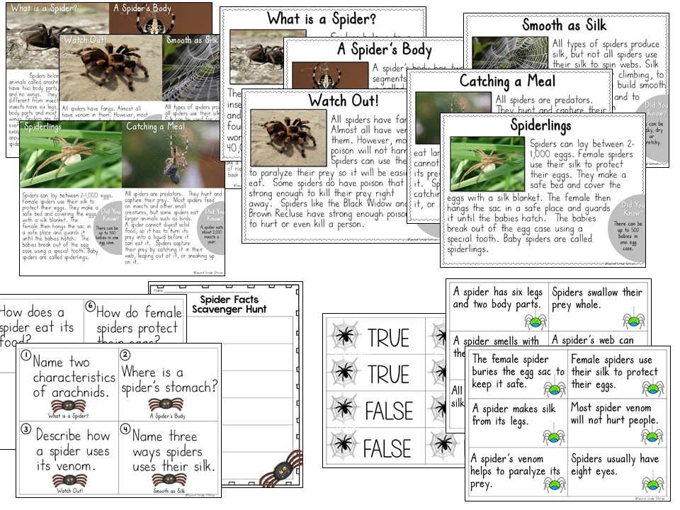 http://www.teacherspayteachers.com/Product/Spiders-a-nonfiction-mini-unit-1507040