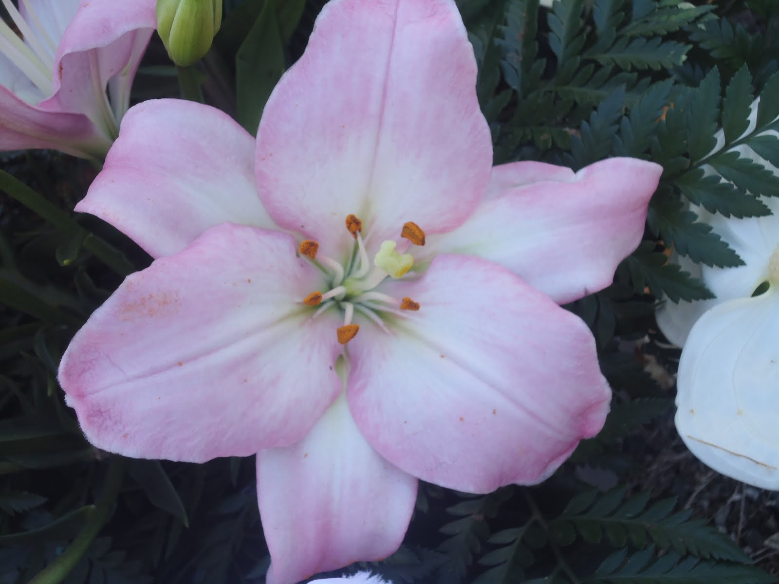 Flor Da Vida