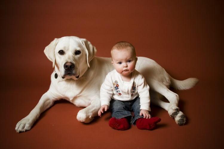 Top dog breeds for kids luv my dogs - Best dog breeds kids ...