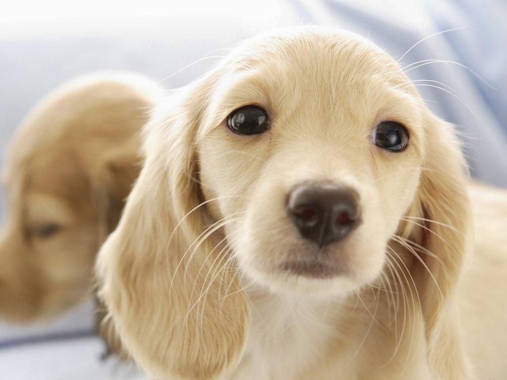 Educa a tu Perro Con Brandom