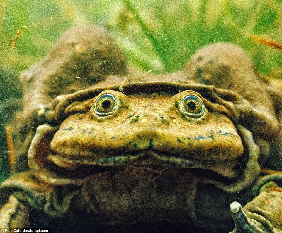 Top 20» de los animales más raros del Planeta ABC es - fotos de animales raros y feos