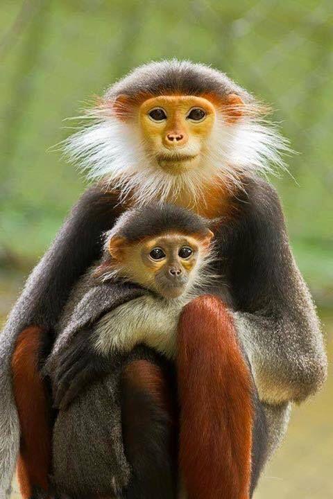 Elk dier heeft recht op een goed leven.