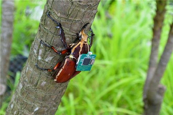 Gambar Robot Kumbang Cyborg Yang Dapat Terbang