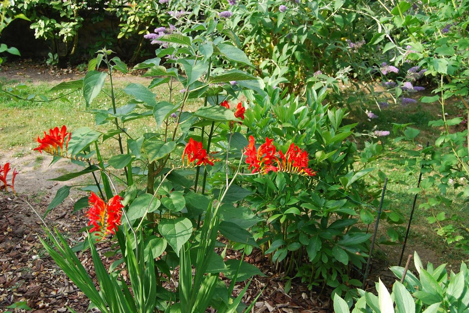 Le blog du jardin de maminou for Jardin 5 juillet biskra