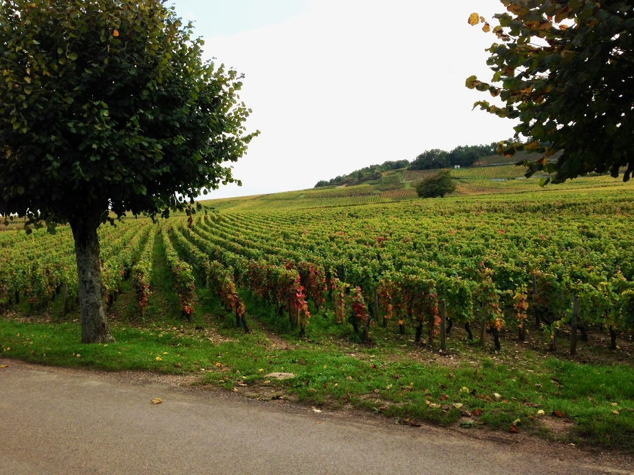 North of 9 fine wine burgundy exploring the c te d or part three - The splendid transformation of a vineyard in burgundy ...