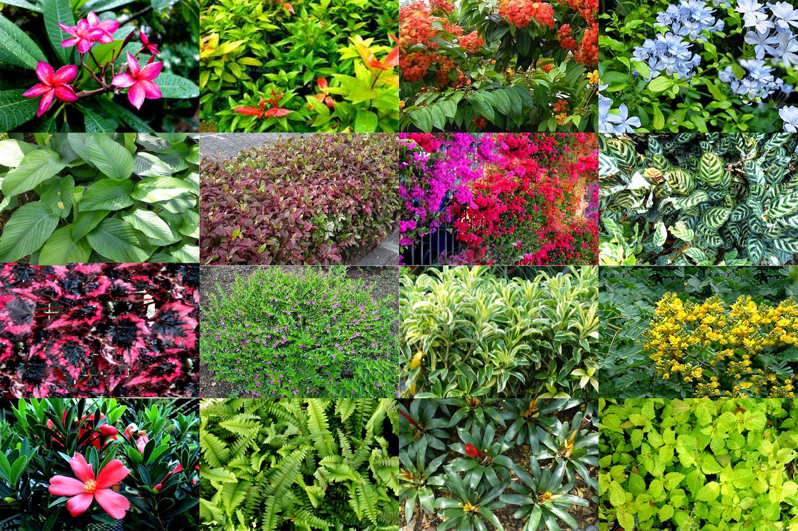 garden plants and trees scientific names scientific name