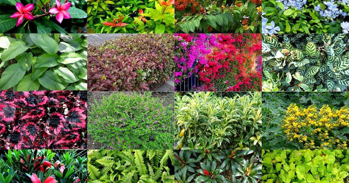 Garden plants and trees scientific names scientific name of landscape plants and trees in for Garden plants names and pictures