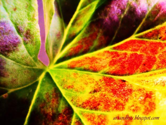 Cores feitas de espontaneidade, coragem, e autenticidade... São cores assim, que podemos facilmente, encontrar na Natureza. / Colors made of spontaneity, courage, and authenticity... That is the kind of colors, that we can easily find in Nature.