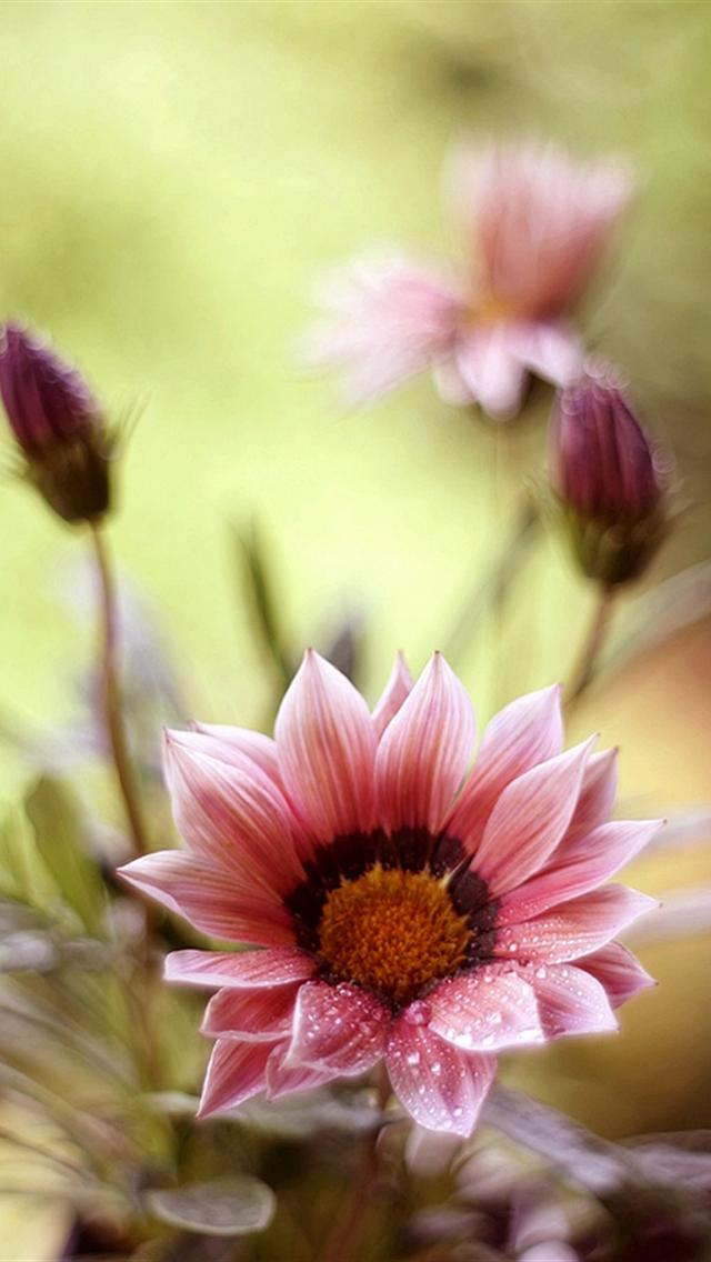 Cute Beautiful Flowers Iphone 5 Wallpaper
