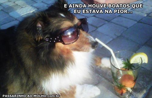 cachorro bebendo, cachorro de óculos