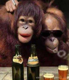 similar okt semua foto downloading gambar lucu monyet lucu gendong