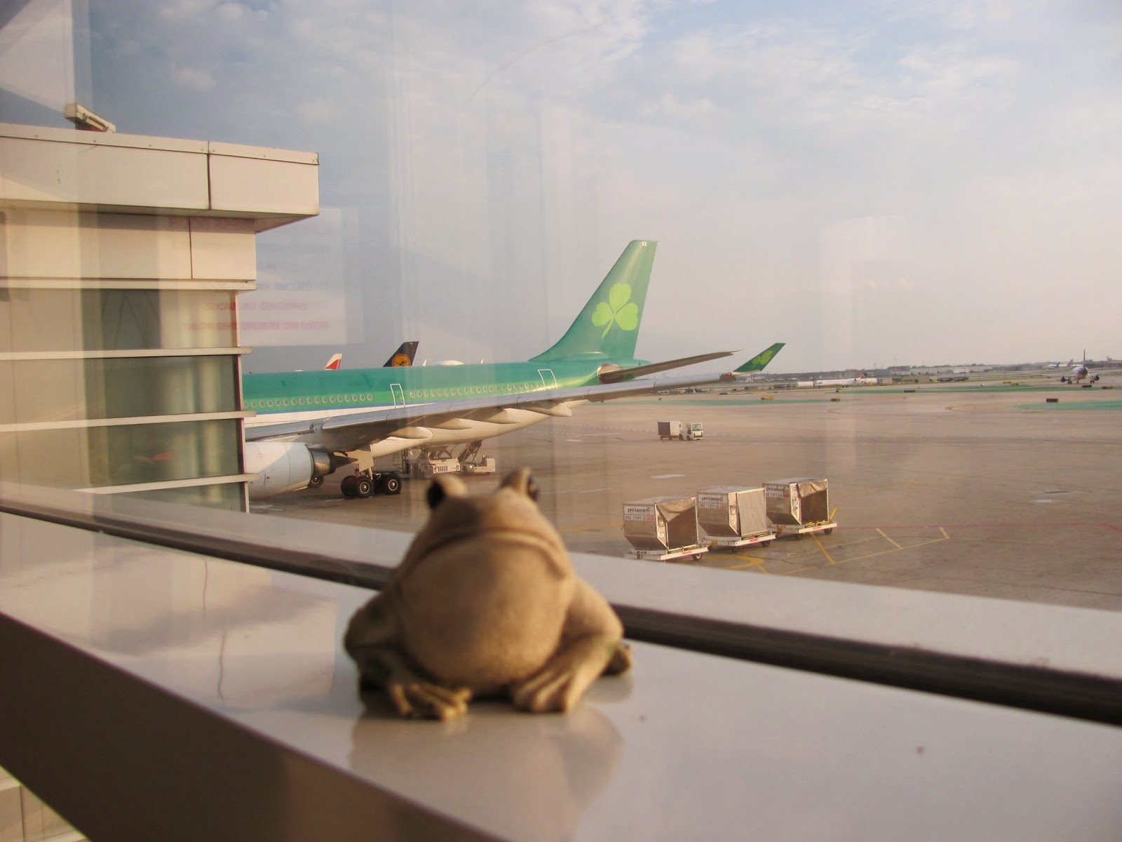 Frog sits on a windowsill looking out to our Aer Lingus plane