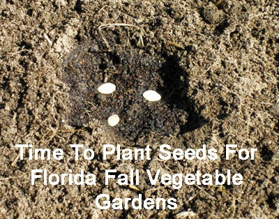 August is the time to plant warm season vegetables in Florida