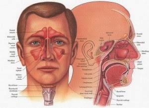 Cara Pengobatan Penyakit Sinusitis