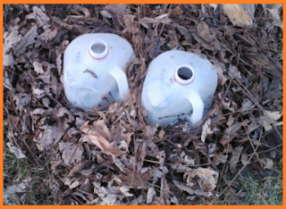 plastic milk jugs surrounded by dry leaves