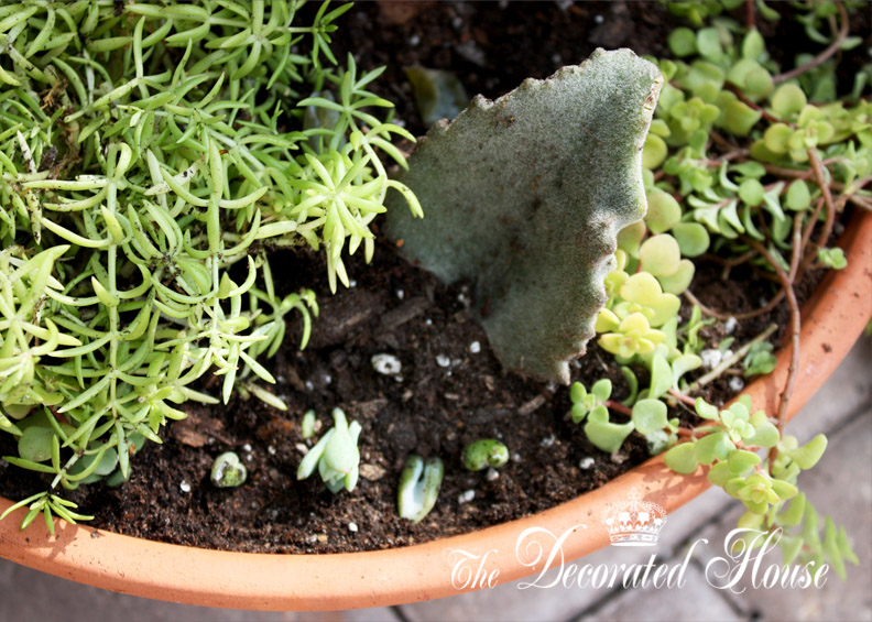 The Decorated House How to Create a Succulent Dish