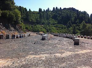 Το μελισσοκομείο του Θύμιου Πόρου στα Βασιλικά (πεύκος)