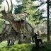 อธิบายภาพของไดโนเสาร์มีเพศให้กับเด็ก ๆ ของคุณ