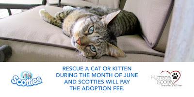Cat Adoption Florida