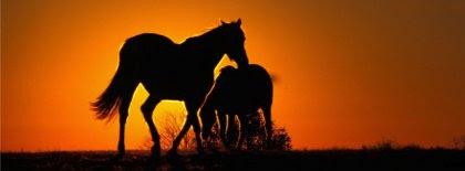Saiba como ajudar nossos equinos
