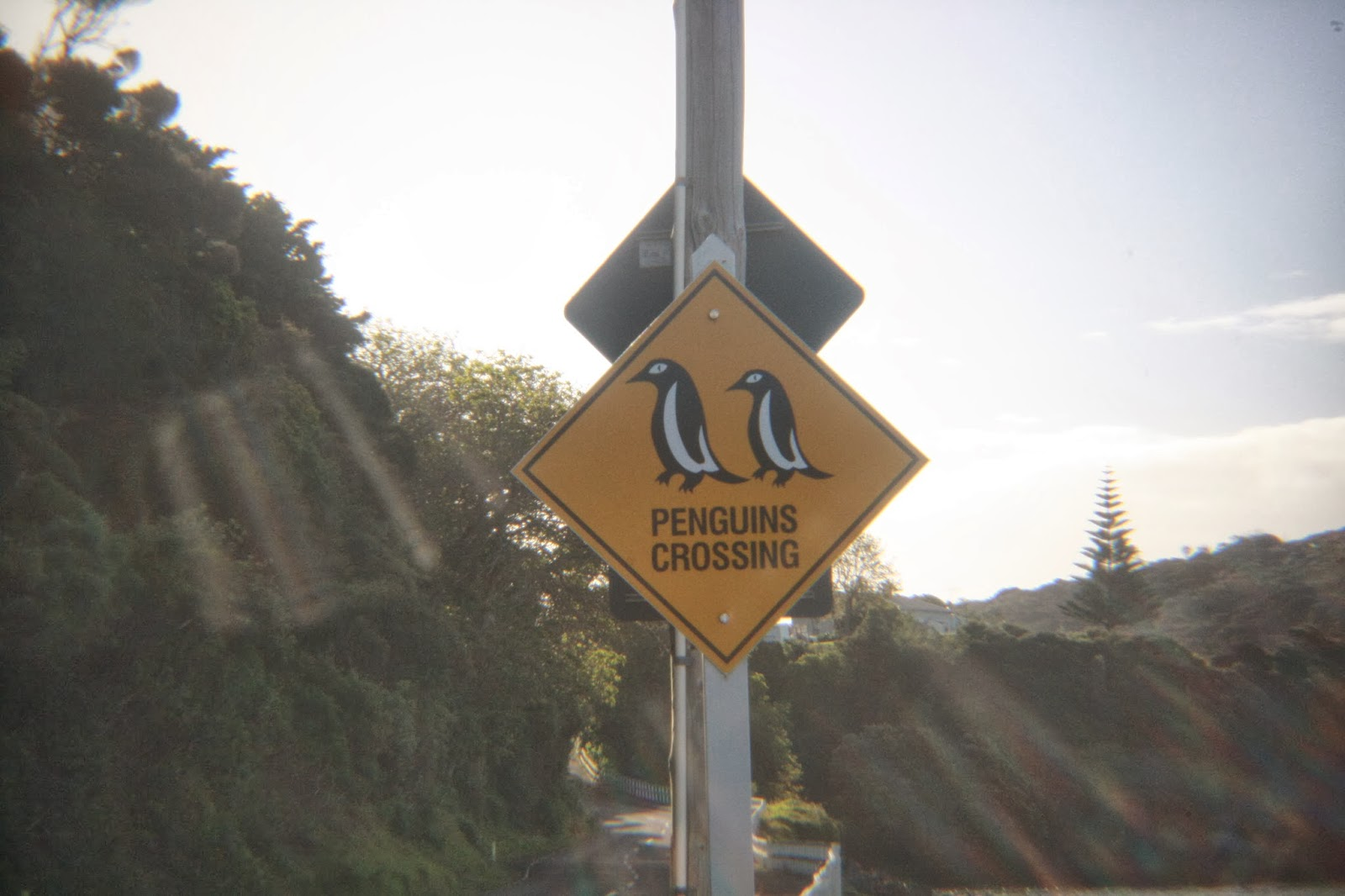 A penguin crossing road sign.